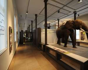 Museum of Natural History - 250 years